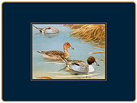 Tischsets Lady Clare - WILDFOWL - Placemat 4er Set